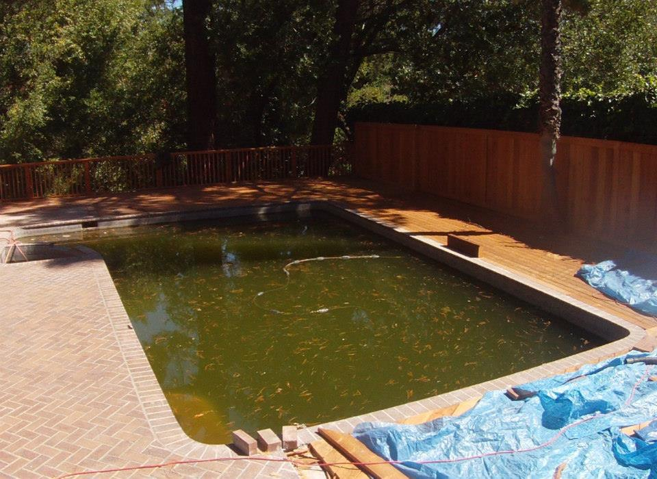 Neglected Swimming Pools Produce Mosquitoes Putting You And Your Family At High Risk For West