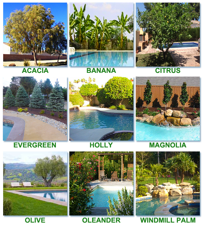Best Amp Worst Trees To Plant Around A Pool For Optimum